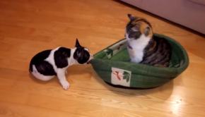 cat pup