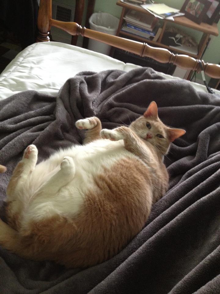 fat cat 8